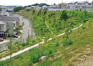 宅地造成地の切土法面緑化