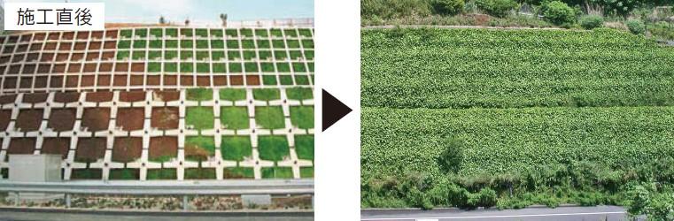 法枠・受圧板を、つる植物で被覆修景