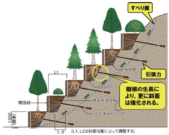 1 .工法概要〈森の再生と間伐利用〉