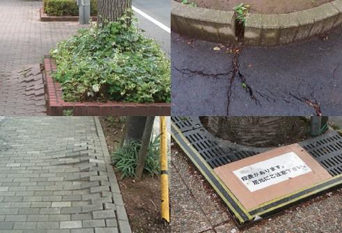 植栽根の歩道への侵入例