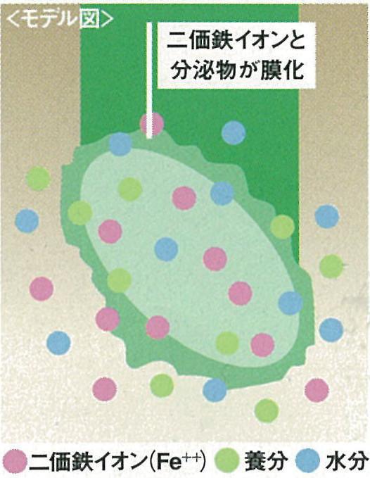 2価鉄イオン