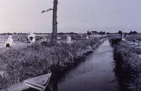 写真-1 洪水と共生する水田地帯(昭和前期、江戸川区)