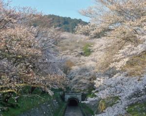トンネルは寺や神社が立ち並ぶ山を突き抜けている