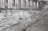 写真-4 1959年スタンド下に設けられた室内水泳場