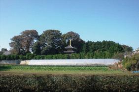 写真-3 お寺の塔が見える風景