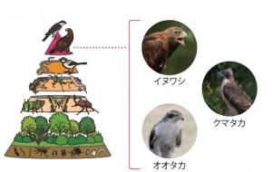 図-1 生態系ピラミッド