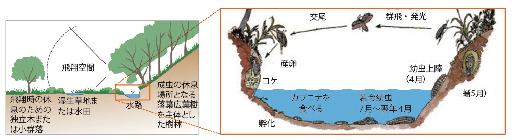 図-5 目標とするホタルの生育環境モデル図