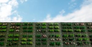 東邦レオが軽量・低コストの壁面緑化システム「ハイクライム・ネスト」を発売